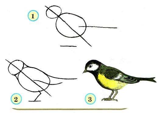 нарисовать вот эту птицу.
